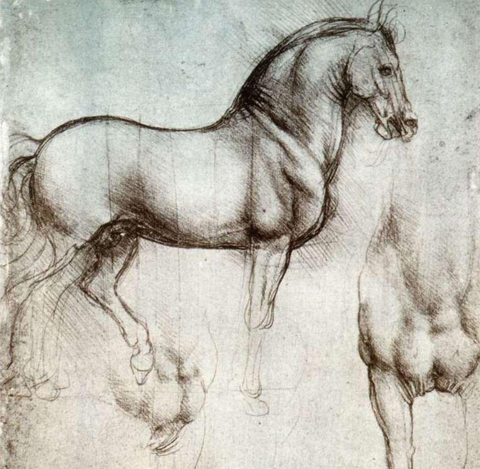 Leonardo horse study